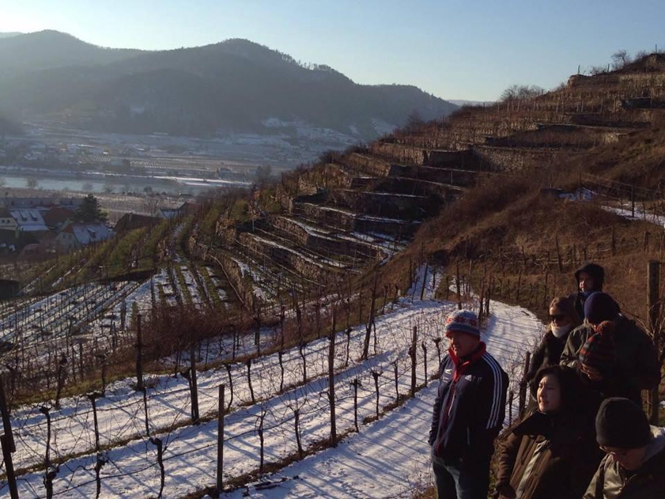 Kellerberg vineyard in Wachau