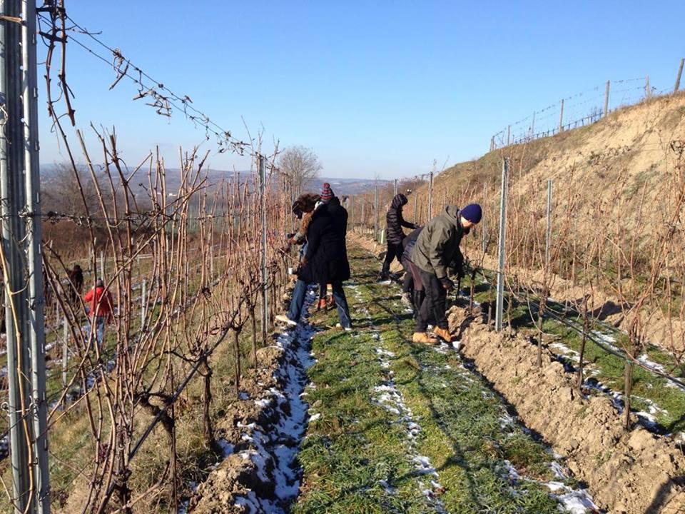 Pruning in Heiligenstein