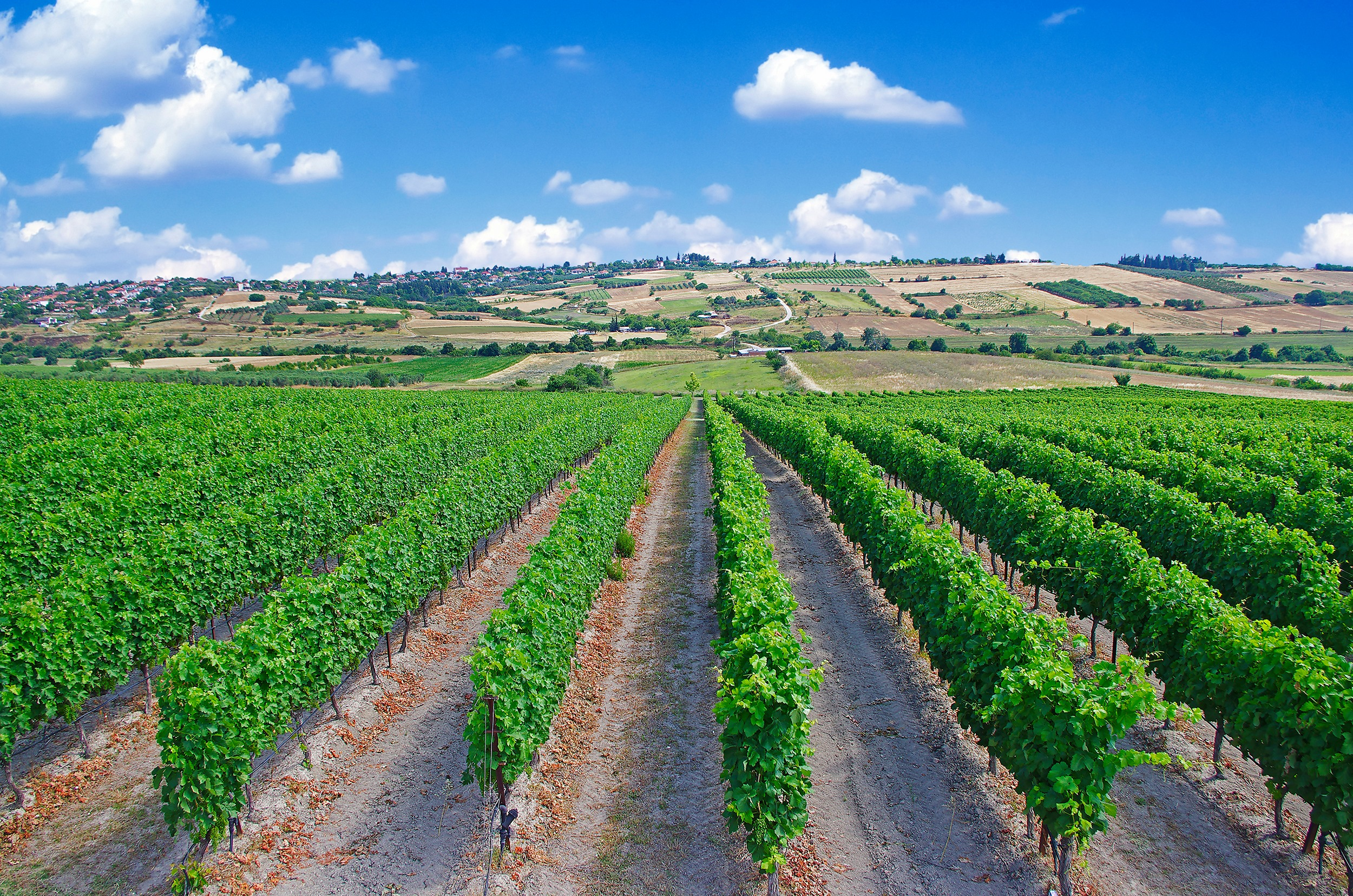 Chrysostomou vineyards