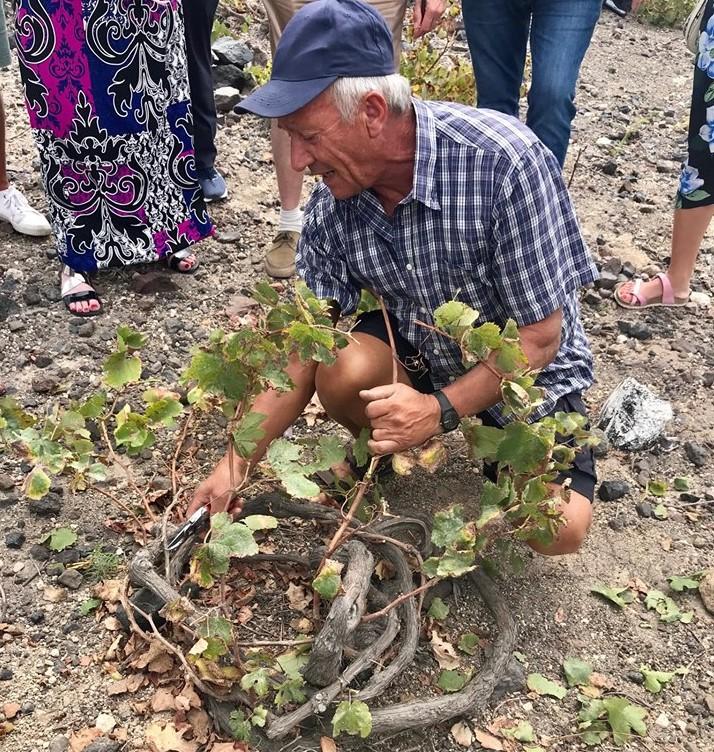 Nikos Pelekanos demonstrates pruning